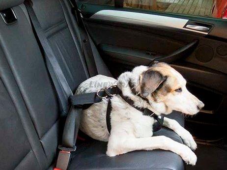 Dog harness size L